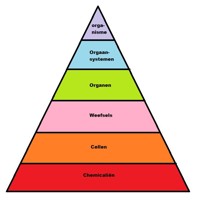 Figuur 1. Een hiërarchische organisatie van menselijke lichaamscomponenten