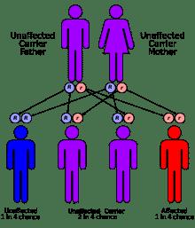 Abetalipoproteïnemie heeft een autosomaal recessief overervingspatroon